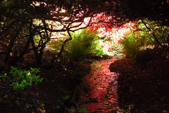 Photo of Isabella Plantation