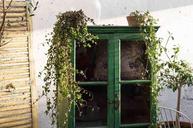 Photo of Gamla Orangeriet