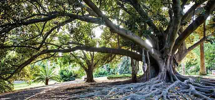 Photo of Jardim Botânico Tropical