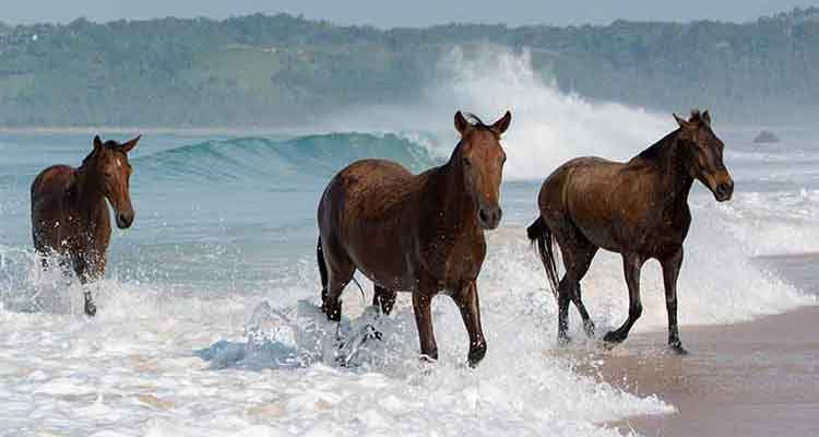Photo of Swimming with Horses